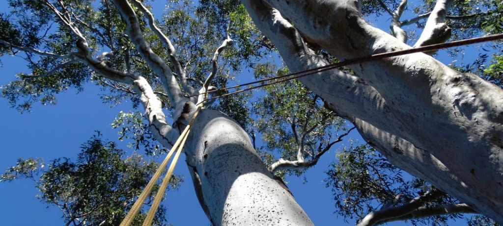 tree service fairfield connecticut