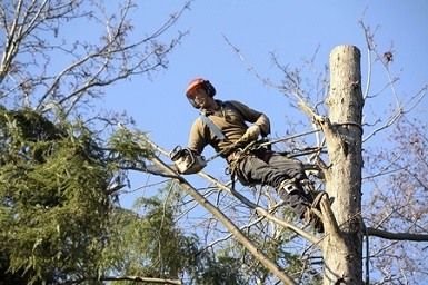 tree service fairfield ct 06825