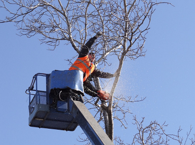 branch removal fairfield ct
