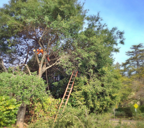 tree trimming fairfield ct