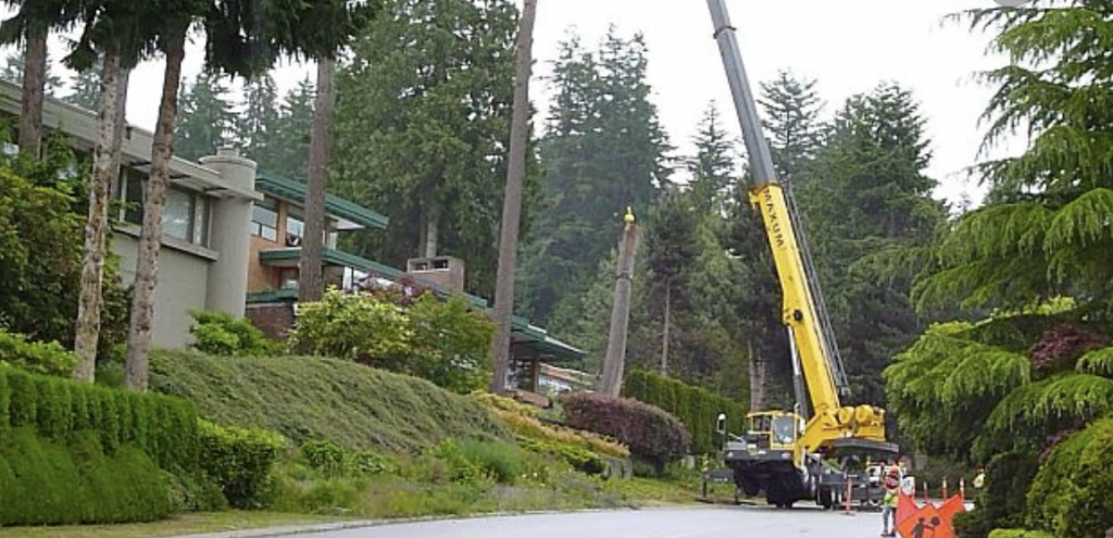 fairfield tree removal
