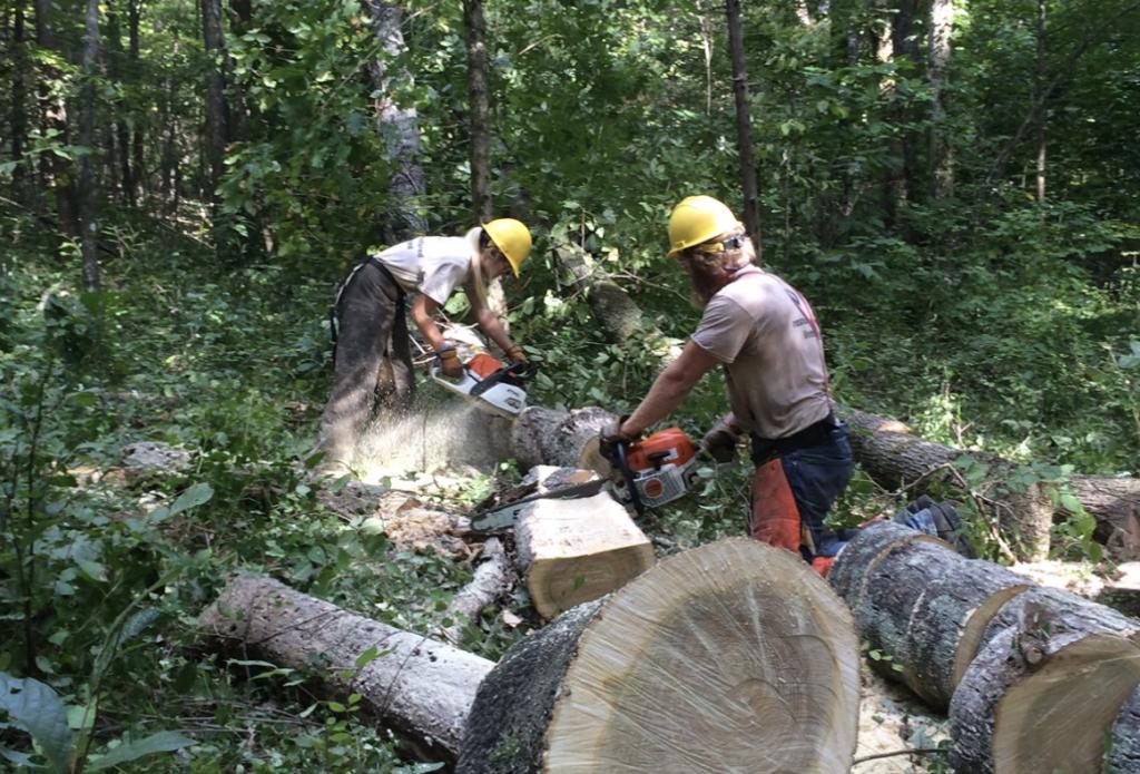 fairfield tree trimming