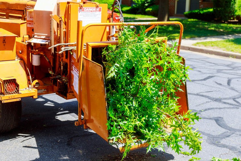 affordable tree removal connecticut